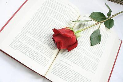 rose-615259_1920