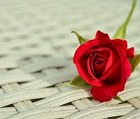 rose-812765_1920