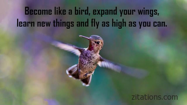 Quotes about birds 10
