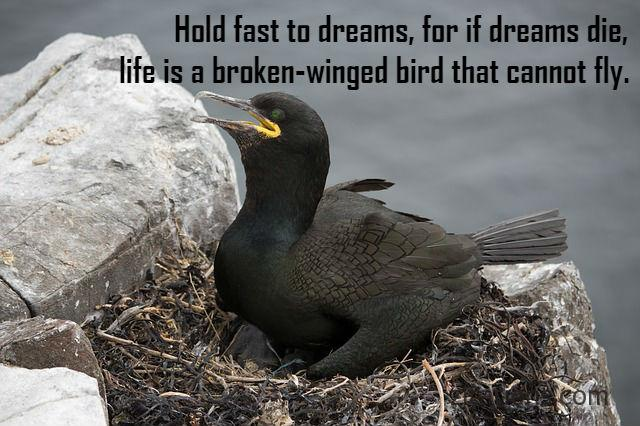 Quotes about birds 9